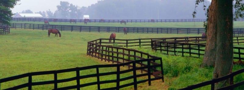 Milton GA Horse Farm